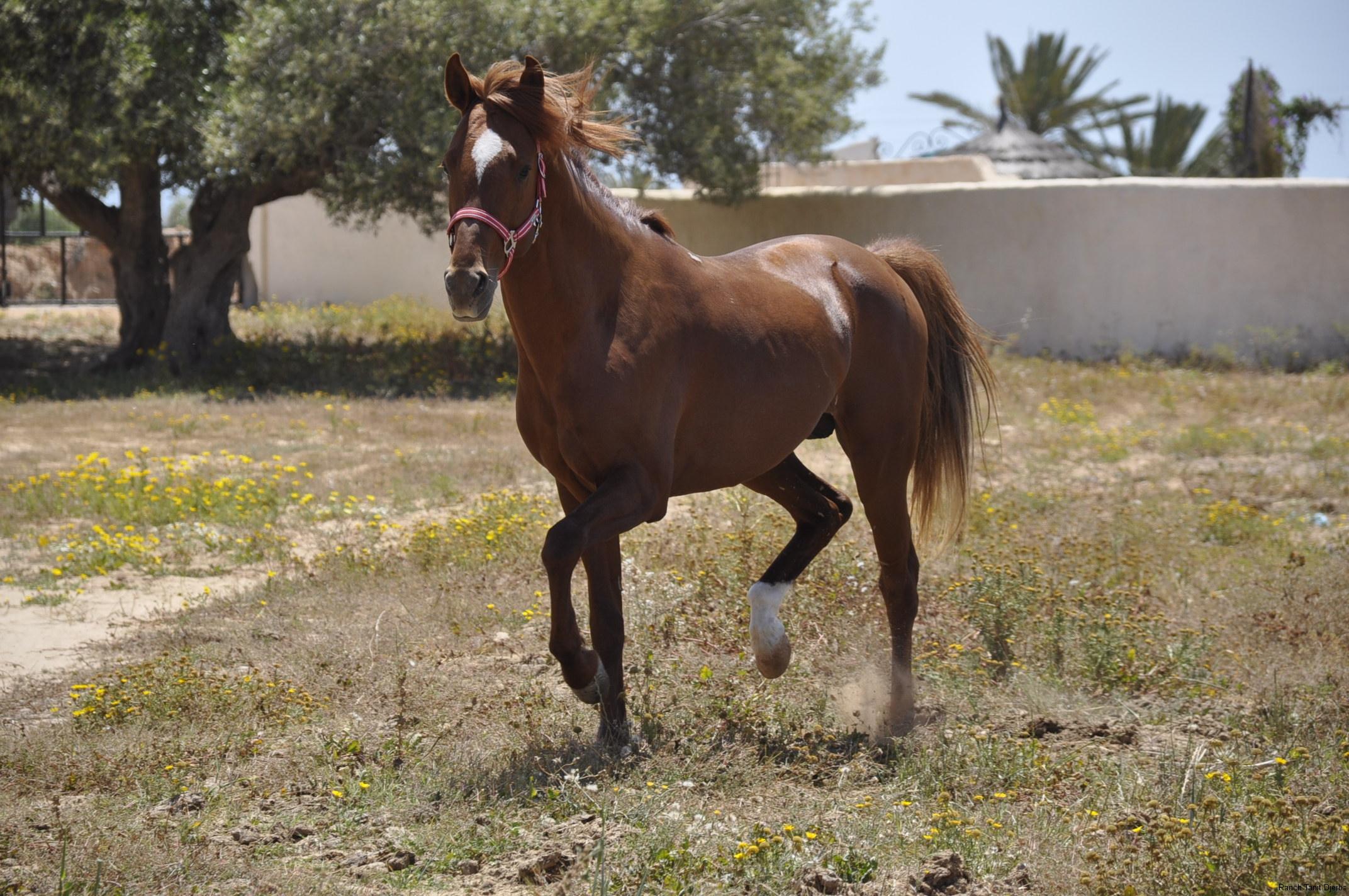 Ranch Tanit Djerba 11