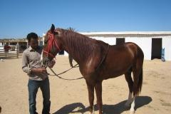 ranch_tanit_djerba 603